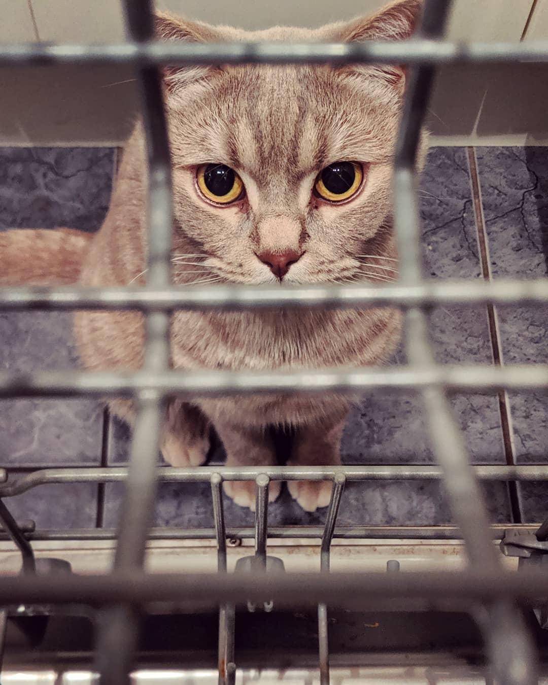 洗碗机和猫