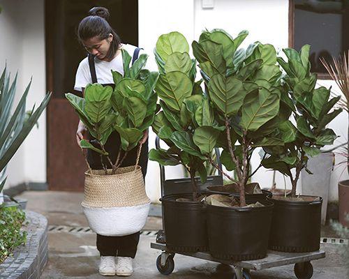 植物计划 | 高逼格室内北欧风绿色植物推荐「第一期」