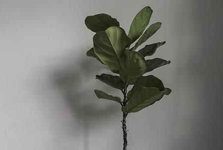 植物计划 | 北欧风仿真绿色植物推荐「第二期」