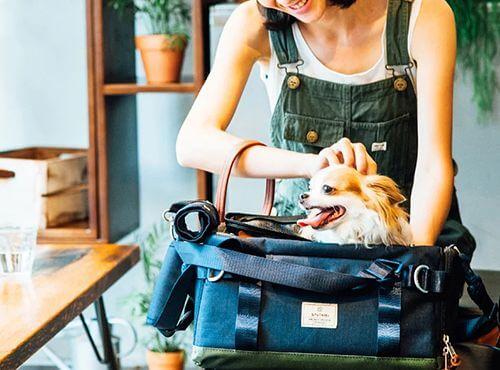 养狗必备 | 宠物狗颜值打理装备指南,让上班族也能优雅的养狗