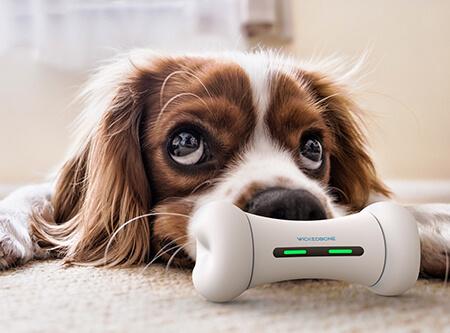 「WickedBone」陪狗狗玩耍的智能宠物玩具,让狗狗不再落寞的疯骨头