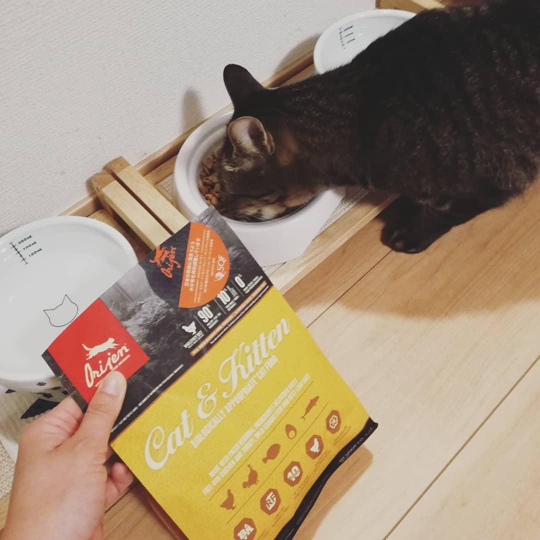 猫咪湿粮与干粮有什么区别