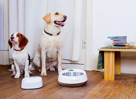 「Petkit Fresh」宠物碗也能是智能的,而且还能抵抗细菌滋生