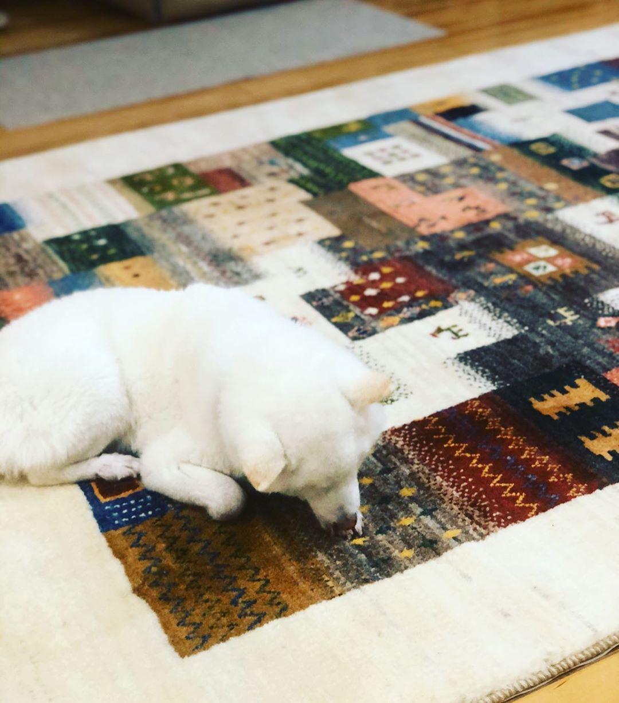 Millais 在访谈中提到,他养的狗狗曾经直接在他家的地毯上尿尿,当时 Millais 反应十分快速地,赶紧把狗抱走,然后立刻用卫生纸吸干,再喷上苏打水去味。Millais 笑说,还好他处理地快,也因为使用的是深咖啡色地毯,所以没有留下痕迹与味道,要不然他应该会发疯。