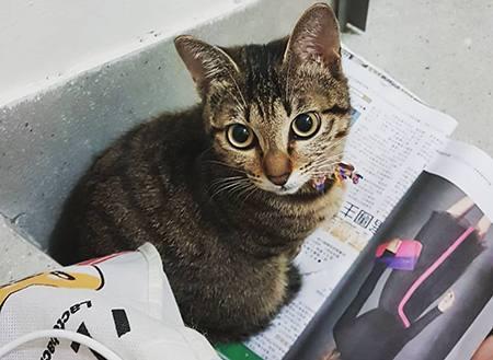 新手养猫的基础知识有哪些?一份入门级养猫指南请注意查收