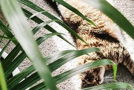 猫砂选购指南   从猫砂的作用、种类,到猫咪为什么不用猫砂盆