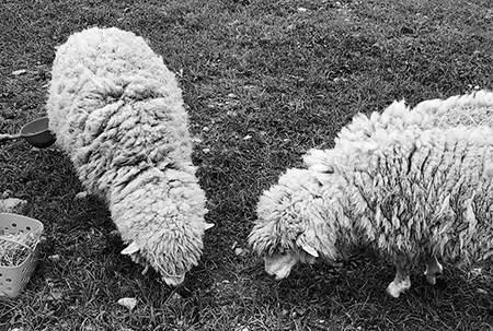羊毛脂是什么,是否有害,以及用它做的乳头保护霜可以吃吗?