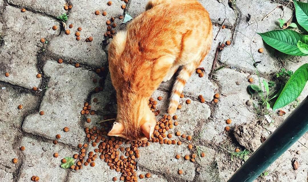 不同的猫咪需求是不同的