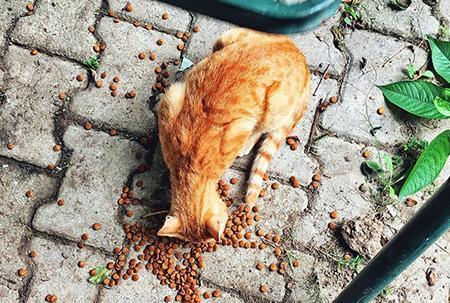 猫干粮选购指南 | 从猫咪的需求,天然粮与无谷粮的区别,到如何选择猫干粮
