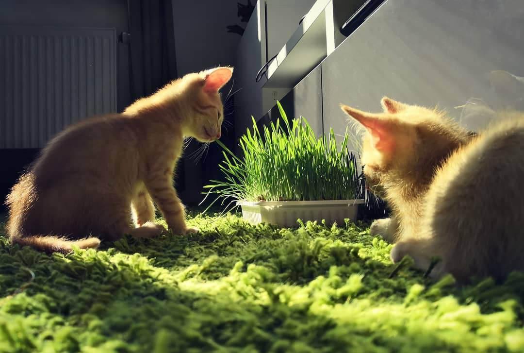 从猫的进化史,谈谈为什么湿粮越来越受青睐