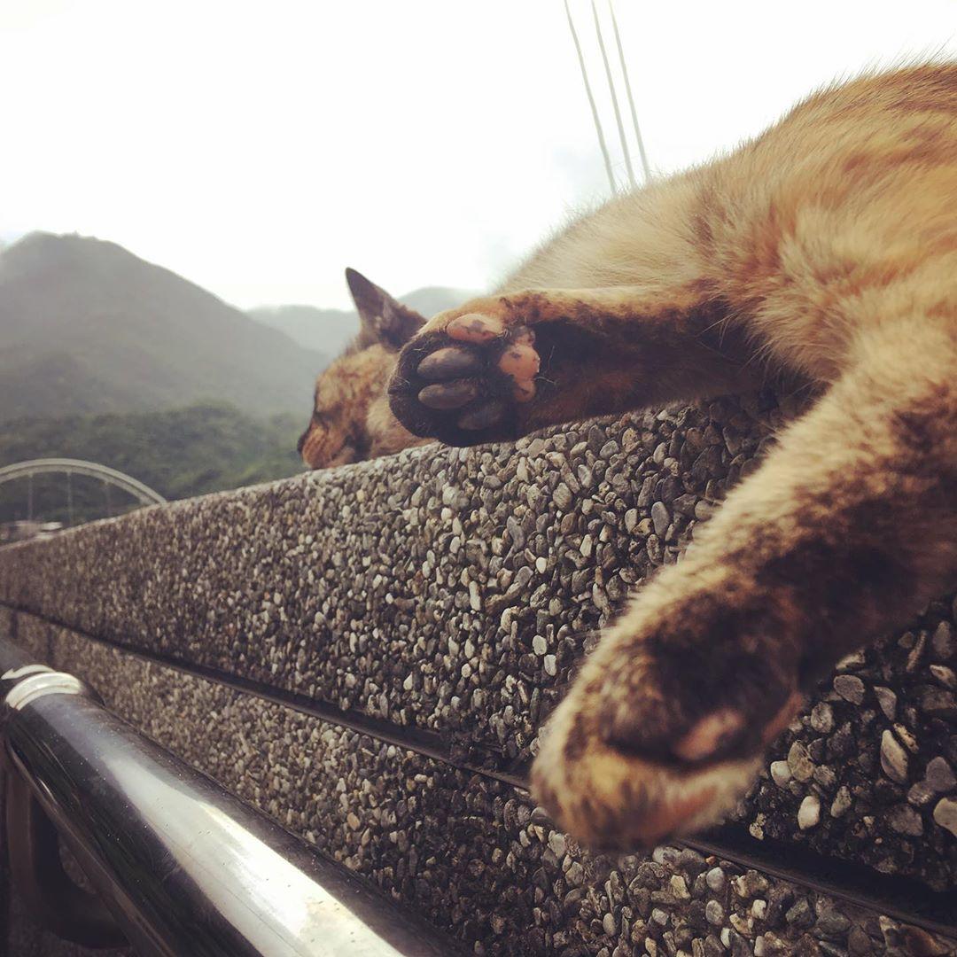 休息的猫咪
