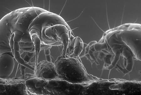 户尘螨是什么,危害及防治方法