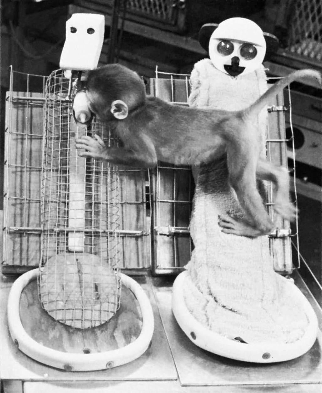 恒河猴母爱剥夺试验