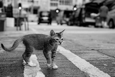 养猫指南 | 从领养到必备物品,再到注意事项