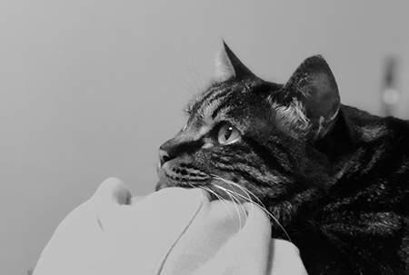 幼猫社会化指南 | 通过社会化训练,培养一只性格超好的猫咪
