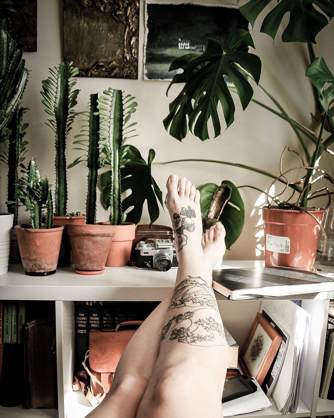 红陶盆绿植