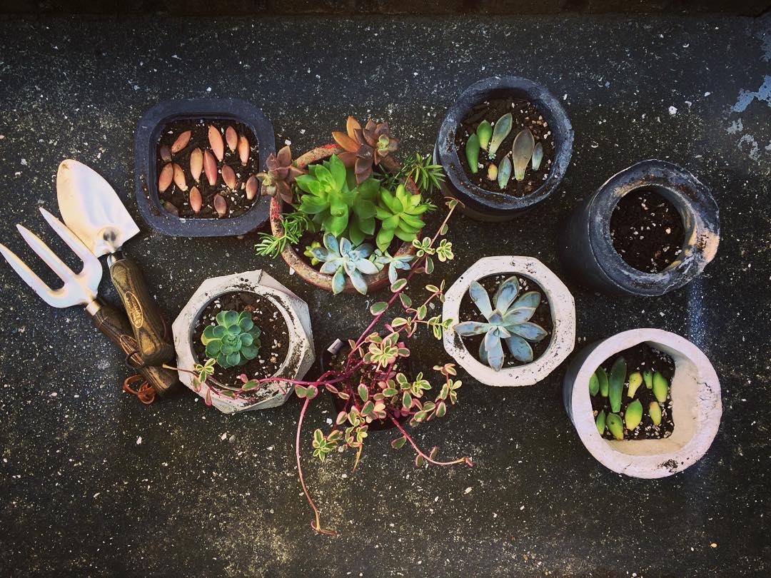 水泥盆盆栽