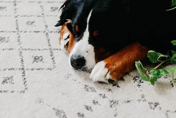 如何清洗地毯?41 种常见的地毯污渍及其清洁方法