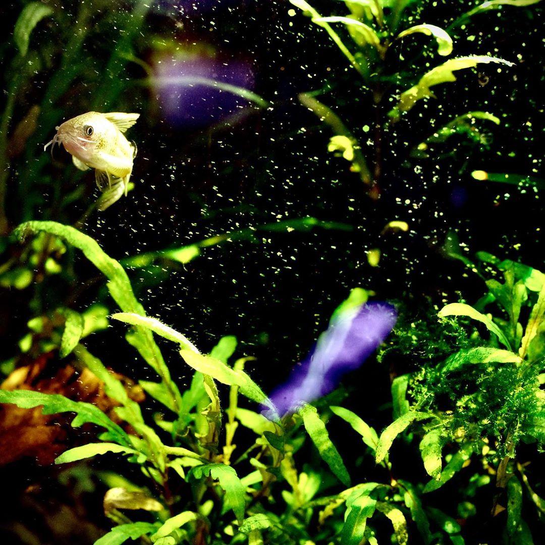 热带鱼喂食