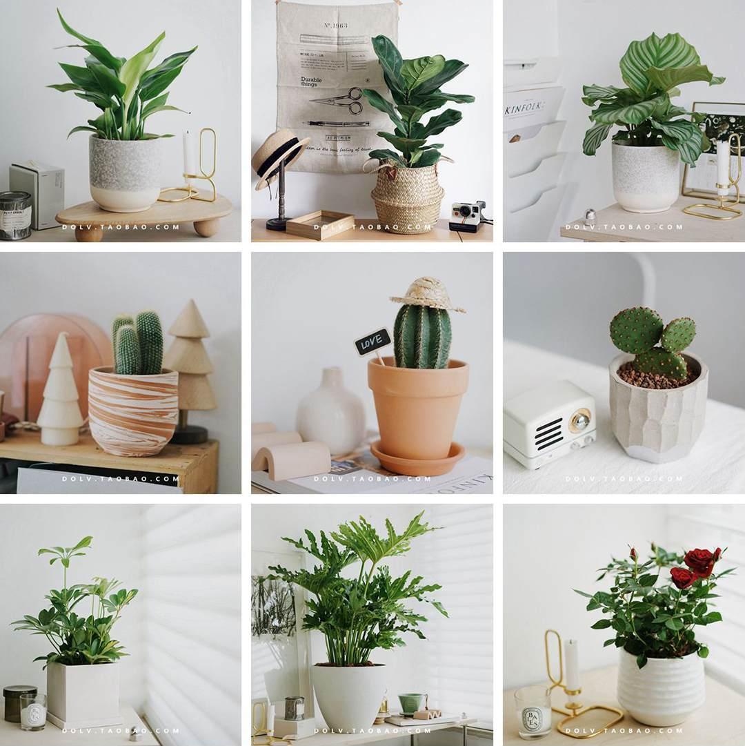 豆绿植物工作室